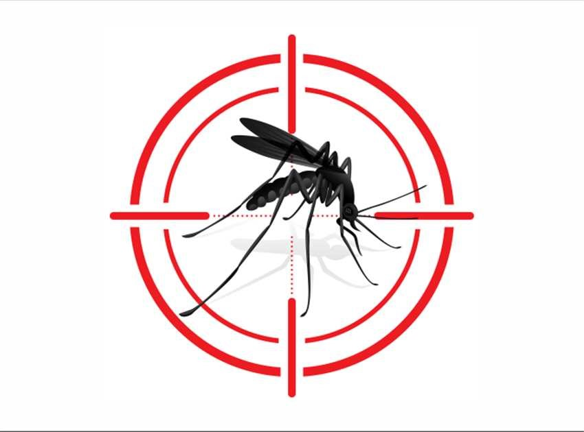 Campanha contra a Dengue - Sanar Medicina