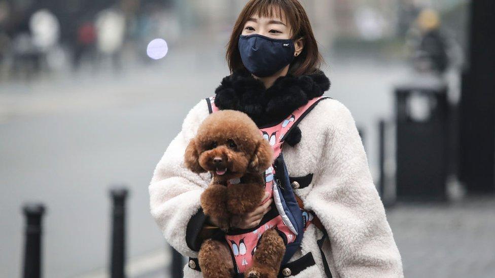 Não há registros de animais infectados ou de oferecerem contágio da COVID-19 para seres humanos