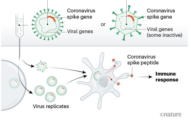 Vacina vetor viral
