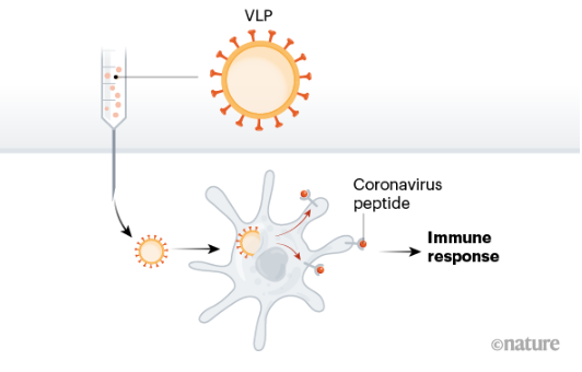 Vacina partícula semelhante a vírus