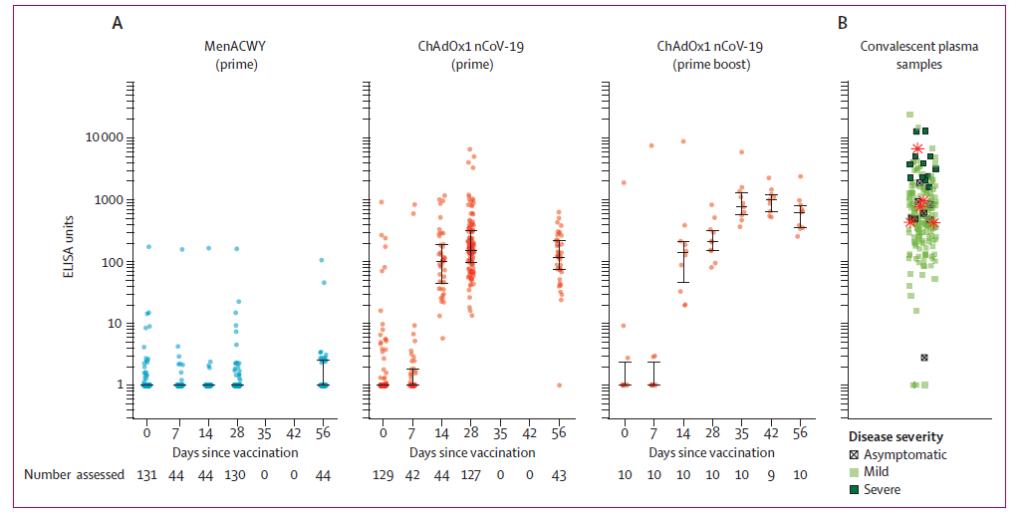 Resposta de produção de anticorpos IgG por ELISA contra proteína Spike nos participantes do estudo (A) e nas amostras de plasma convalescente de paciente com PCR para SARS-CoV-2 confirmado (B).