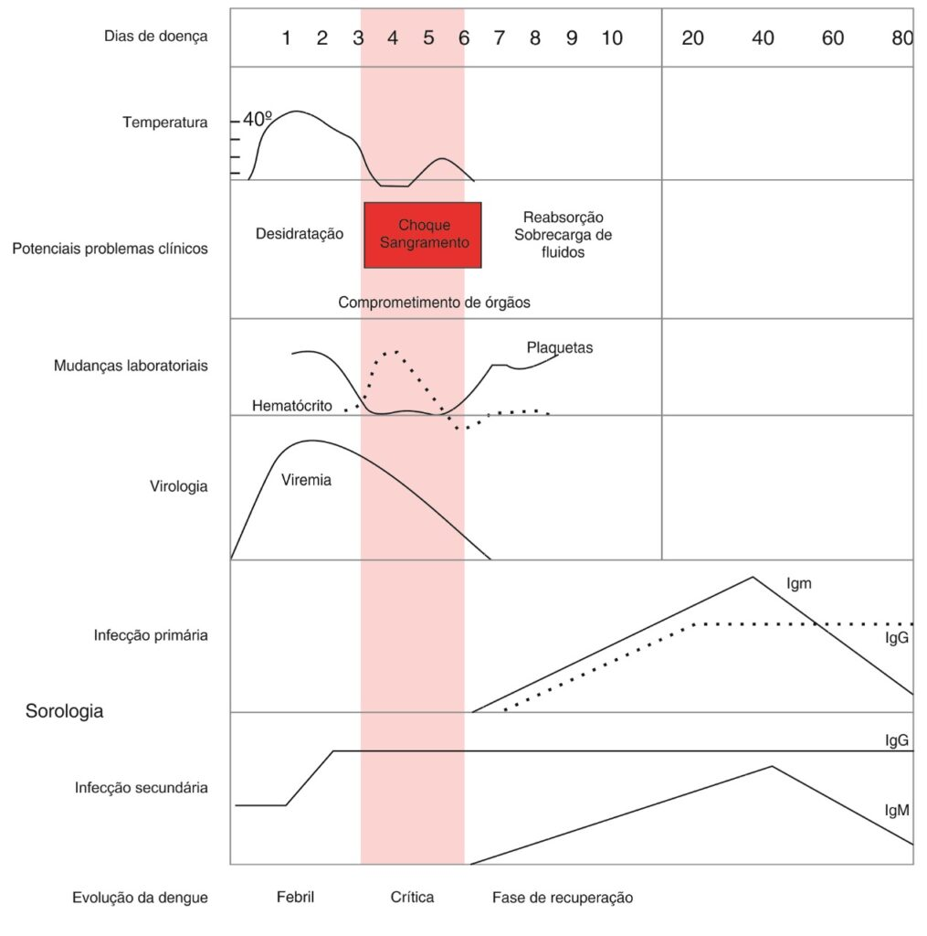 Quadro ilustrativo da evolução clinica e laboratorial da infecção pelo vírus da dengue.  Fonte:  World Health Organization – WHO (2009)