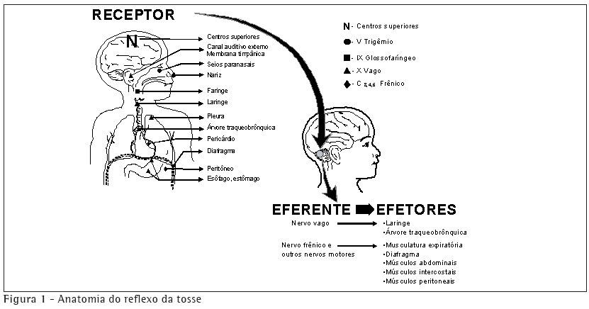 Anatomia-do-reflexo-da-tosse